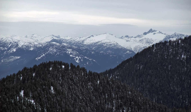 forest, slopes, desktop,