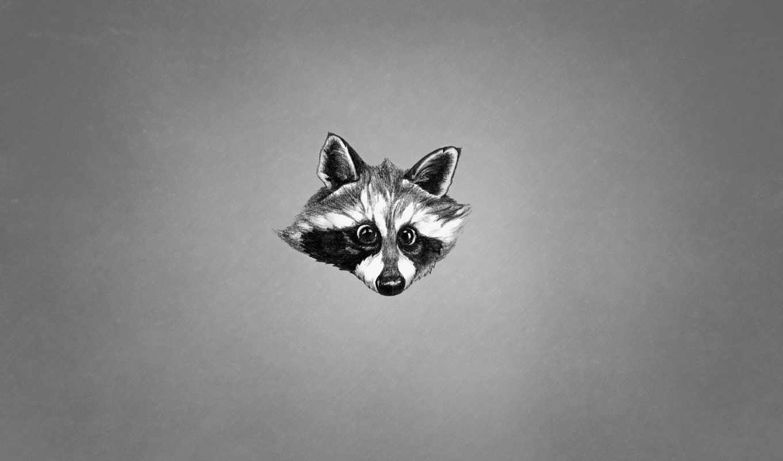 енот, животное, minimalizm, морда, чёрно, белый, еноты, енот,