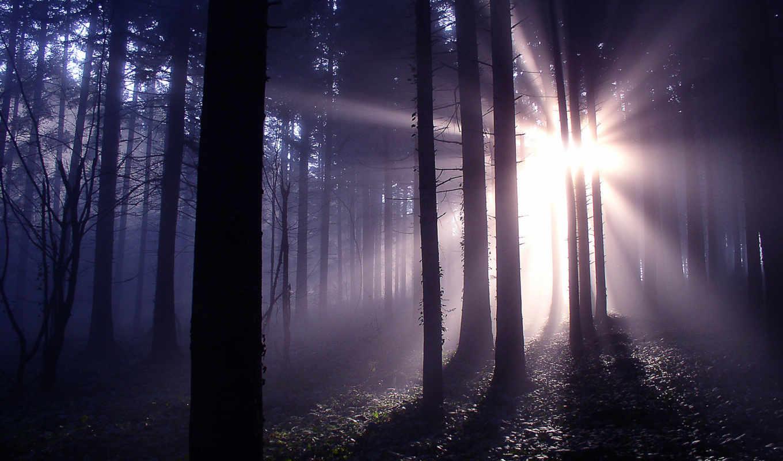 лес, mysterious, desktop, free, res,