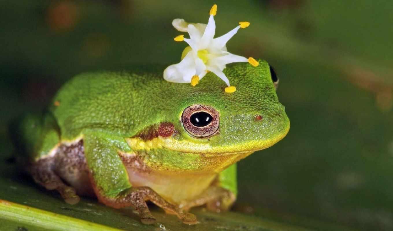 природа, лягушка, цветы, florida, фотографий, everything,