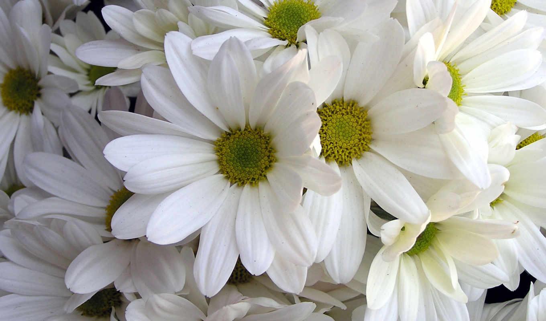 free, цветы, flowers, pictures, desktop, images,