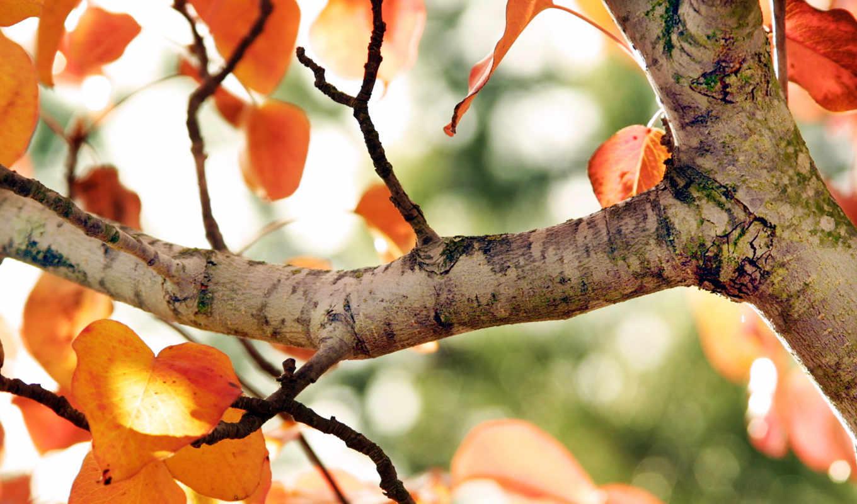 дерево, пасть, природа, осень, trees,