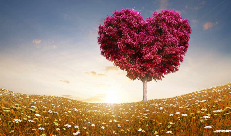 небо, clouds, valentine, стена, день, дерево, сердце, поле, романтика, love,