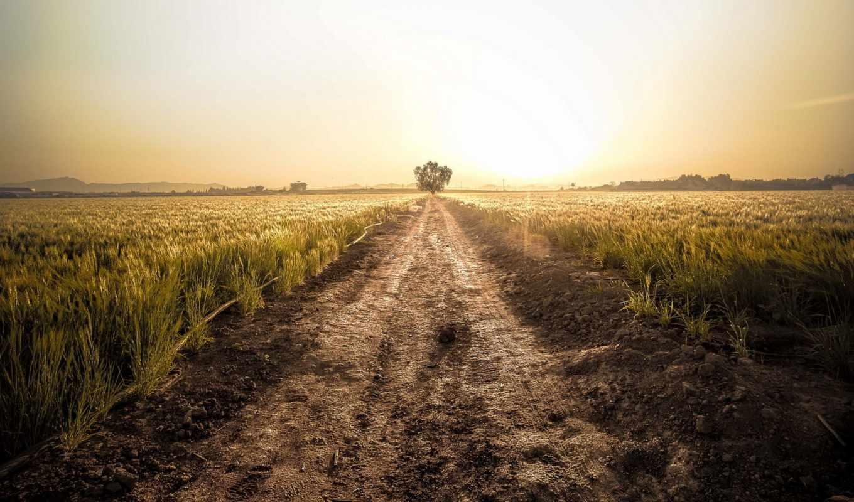 поле, закат, дорога, поспевающей, пшеницы, landscape, сайте, windows, нашем, природа,