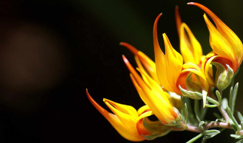 flower, сборник, прекрасных, photography, flowers, красивые, nature, vol, market, flowering, shows, plants, отличных, украсят,