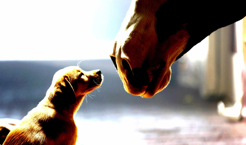 ,щенок, лошадь,
