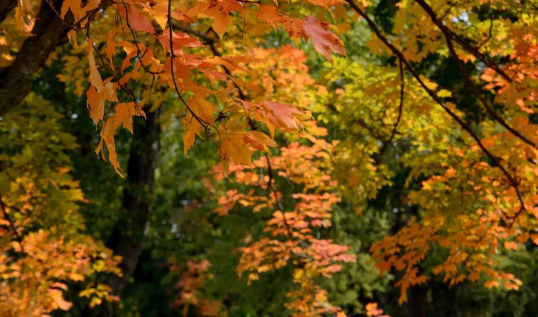 ,осень, листья, trees, high, тона,