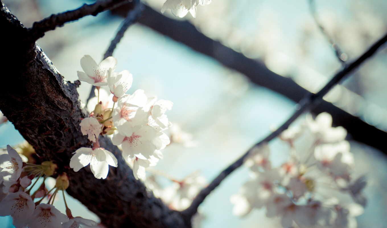 cvety, цветы, branch, цветение, весна, насекомое, макро