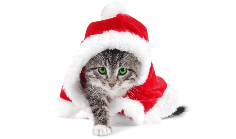 обои, новогодние, кошками, год, новый, кошки, рожд