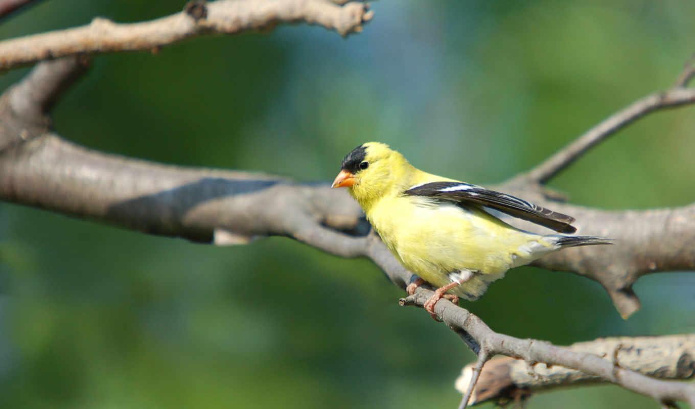 обои, птицы, фото, животные, экзотические, черные,