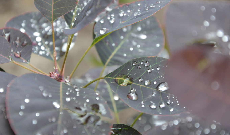 water, макро, капли, drops, листья, free, desktop, bulkaforever, flowers,