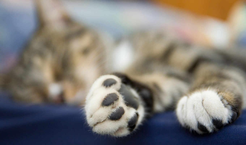 лапки, кошачьи, черные, кота, kot, чёрный,