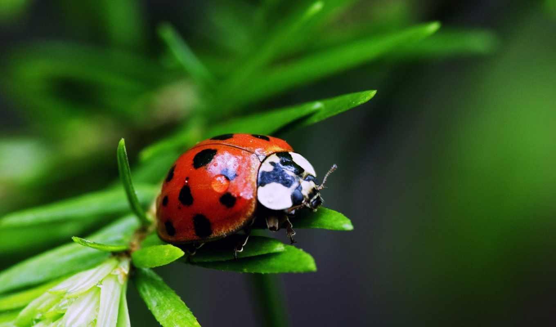 насекомые, красивые, нашей, жизни,