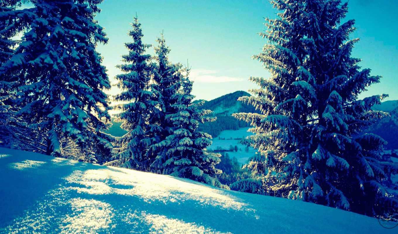 лес, еловый, алтае, отдыха, winter, отдых, горном, маске, определению, хвойный, лиственный,