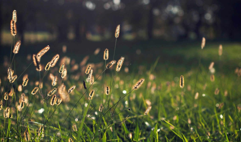 природа, side, greenery, трава, makryi, серьги, зелёный, дерево, размытие