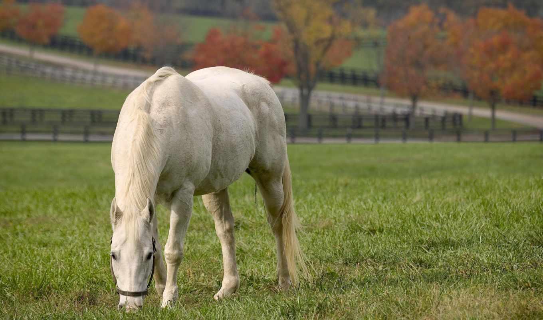 лошади, обои, красивые, kb, лошадь, фото, обоев, к