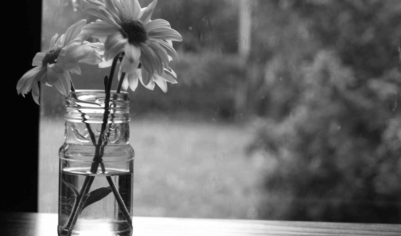 monochrome, flowers, оттенки, desktop, почти, share,