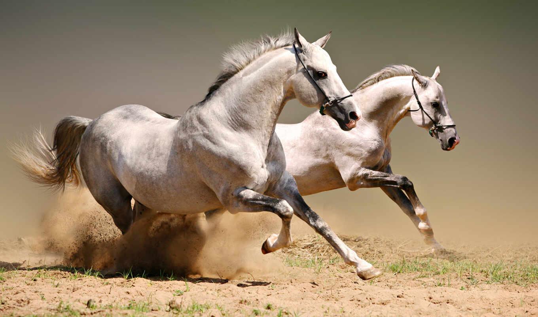 лошади, скачущие, лошадей, лошадь,