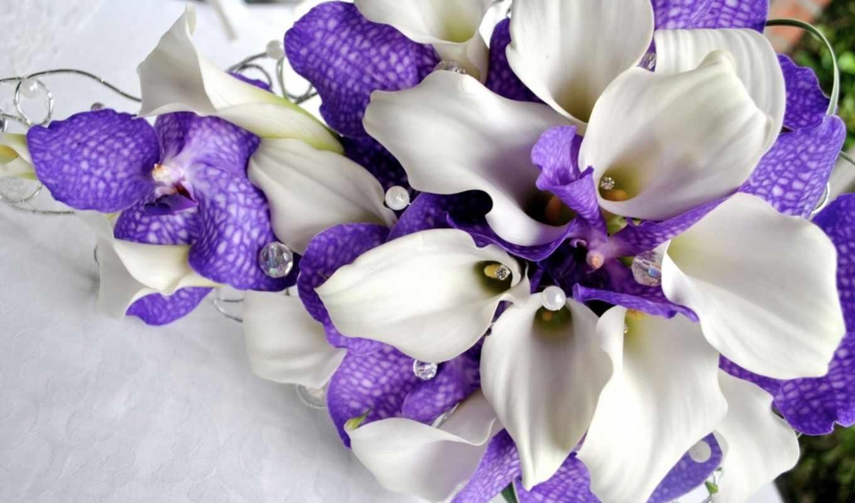 орхидеи, цветы, каллы, белые, flowers,