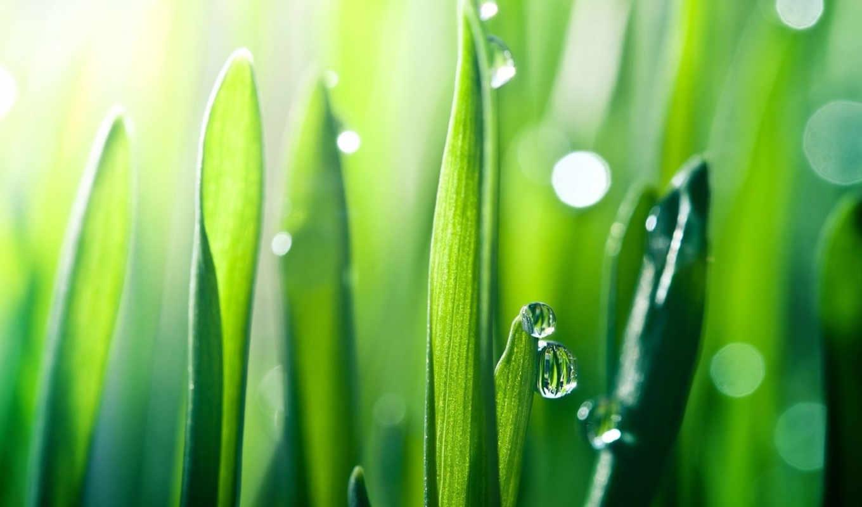 природа, трава, рассвет, дек, перец,