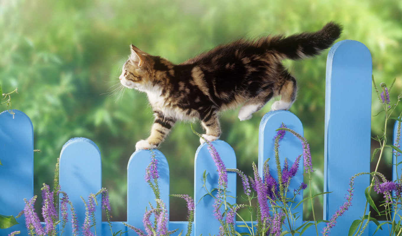 взгляд, кот, кошки, котята, котенок, тюлень, zhivotnye, заборе,