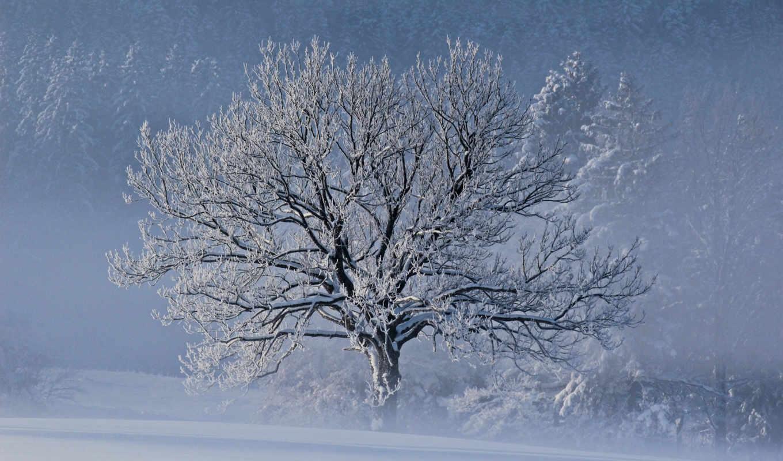 зима, природа, снег, дерево, картинку, картинка,