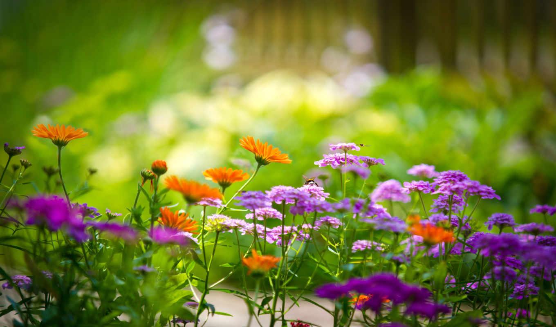 цветы, garden, макро, марта,