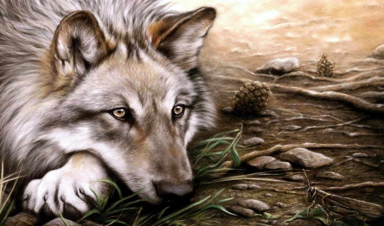 волк, одиночка, wpapers, possible, свой, eti, совершенно,