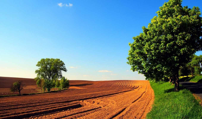 весна, природа, поле, небо, trees, дорога,