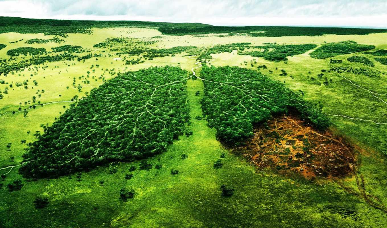 природа, лес, река, деревья, экология, лёгкие, wwf, пейзаж, леса, resort,