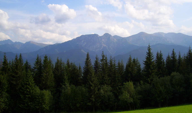 frases, con, imagenes, поляна, природа, трава, горы, луг, significados, лес, небо, облака, definiciones,
