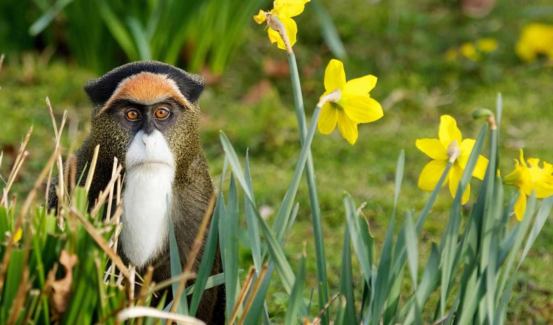 природа, обезьяна, цветы, трава, взгляд,