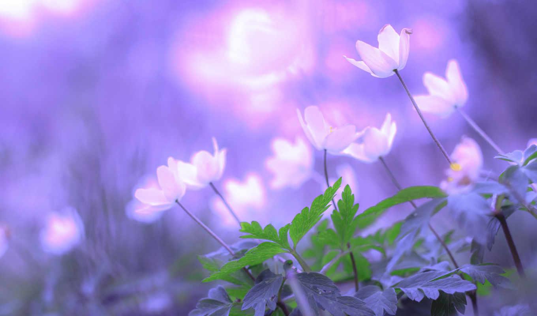 цветы, февр, боке, aku, kau,