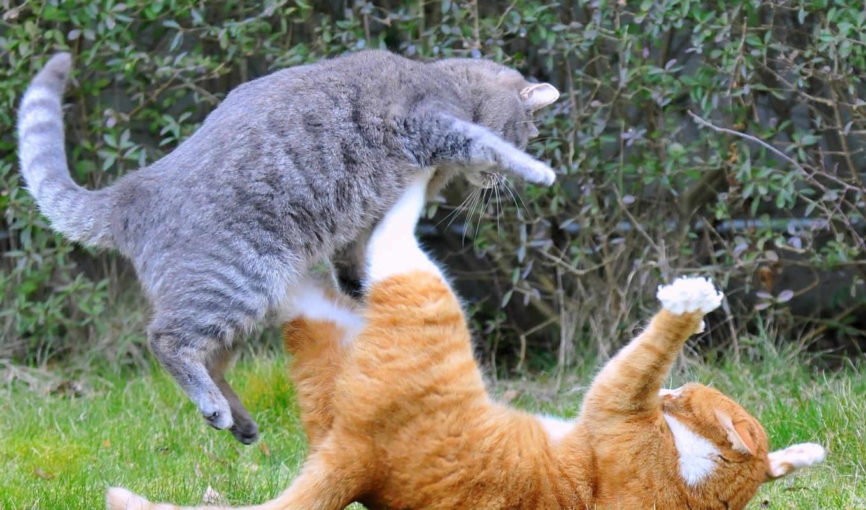 котоматрица, добавил, src, животные, коты, добавлено, нападение, разборки, ты, защита, автор, кошек, двух, кошки, ðºð, вась, отправить, развёлся, другу, блог, ситуация, мура, балла, marijane, вставить