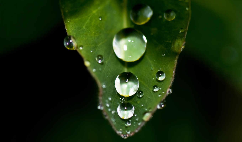 капли, воды, лист, листа, вода, роса,