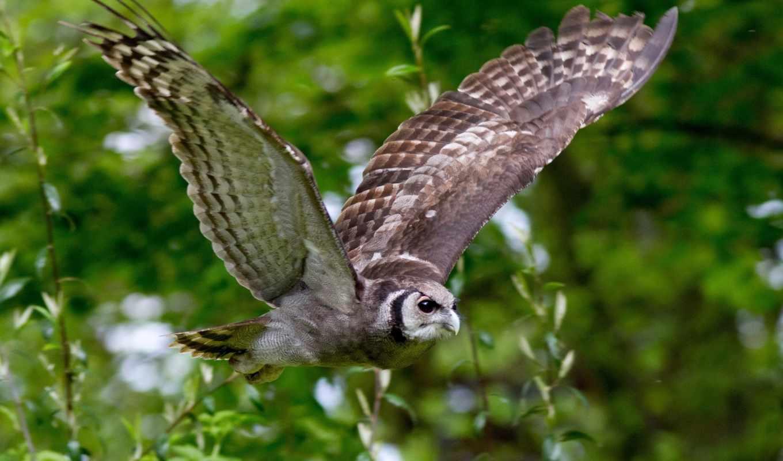 сова, branch, birds, птица, wings, полет,