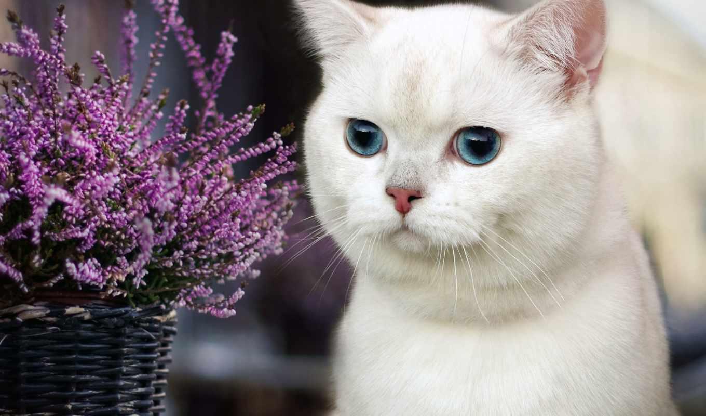 flowers, цветы, корзина, лепестки, кот,