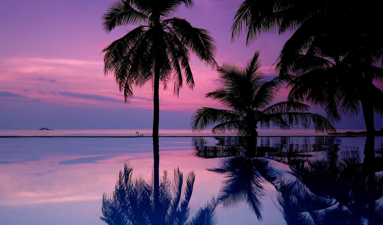 закат, пальмы, trees,