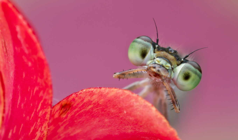 бабочка, zhivotnye, главная, выберите, насекомые, страница,
