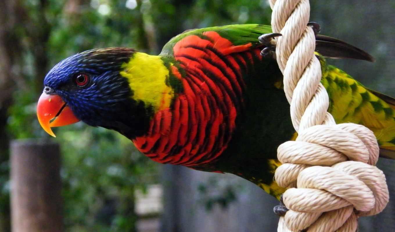 фотограф, красивые, лет, попугаи, жизни, птиц, живут, неразлучники, продолжительнос,