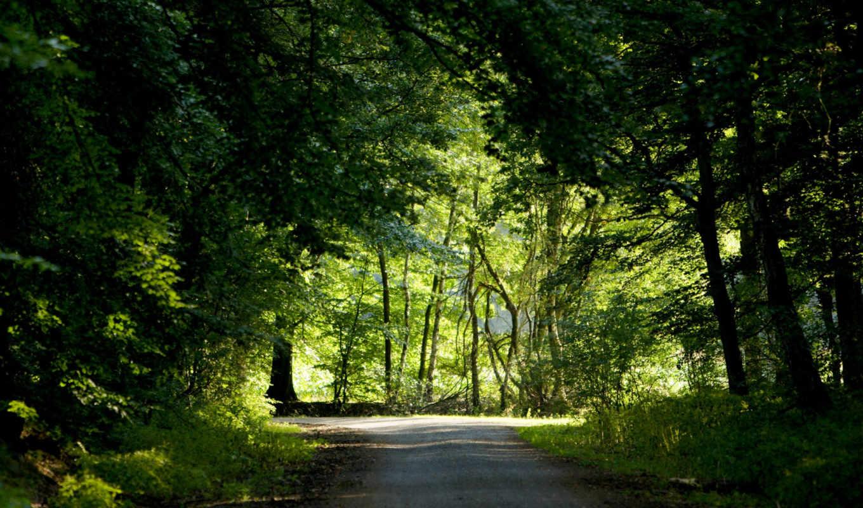 дорога, лес, лесу, деревья,