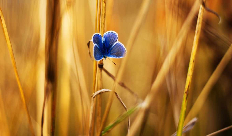 бабочка, травинка, трава, лето,
