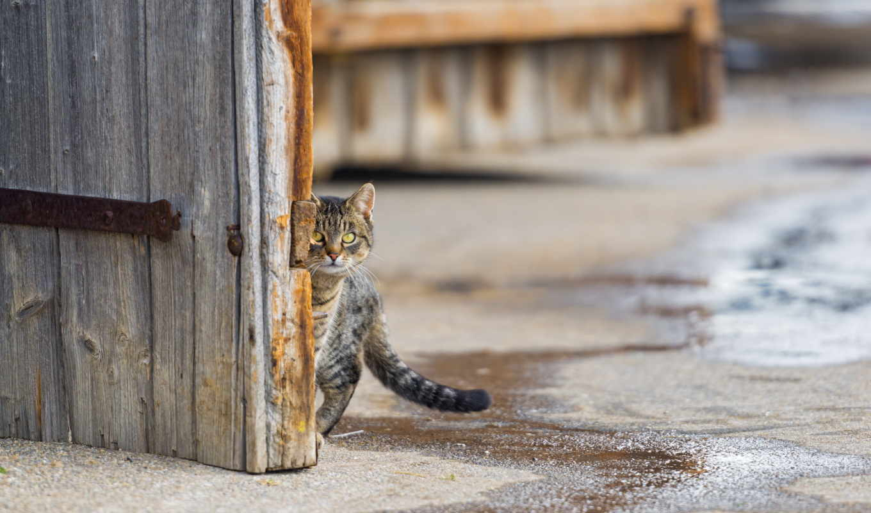 ,двор,варота,кот,