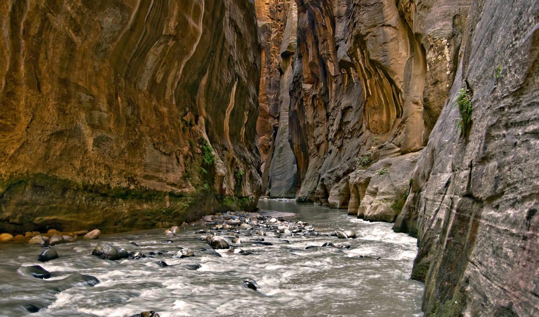zion, narrows, park, national, река, animal, игры, найди, природа, всегда, красивая,