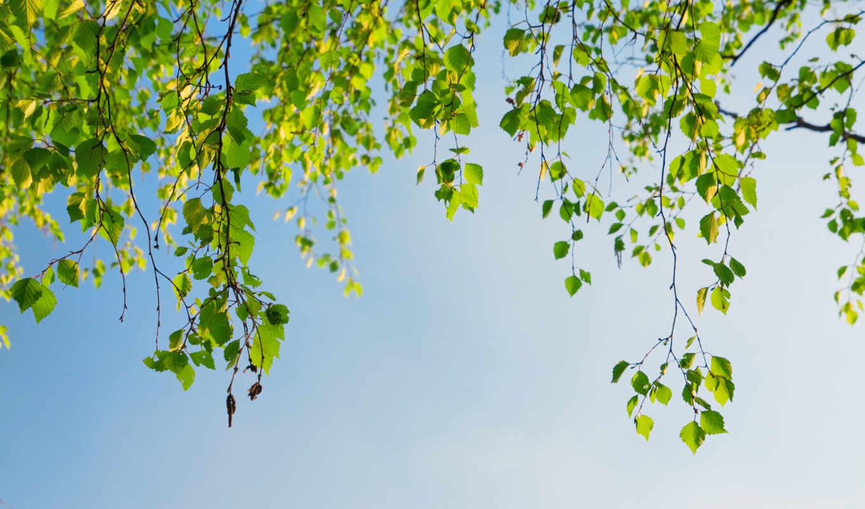 березы, природа, ветки, листья, времена, осень, года, деревья,