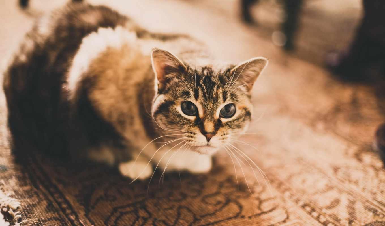 кот, photography, кошка, tom,