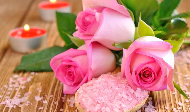 розы, бутоны, сол, коллекция, букет, сорт, роза, desktopwallpape, рейтингу, browse,