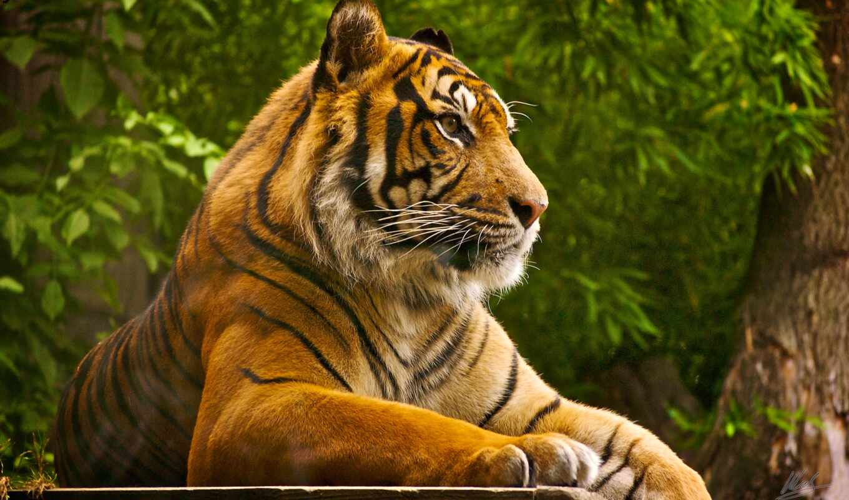 zoo, viagra, london, тигр, animals, new, lion, world,