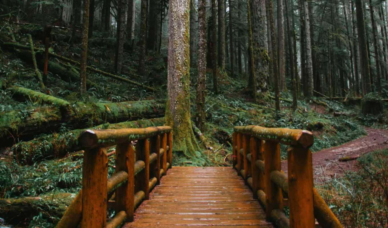 мост, лес, wooden, fore, дерево