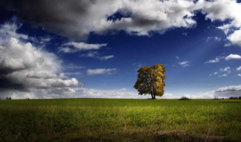 дерево, поле, nature, небо, трава, картинка, картинку, пейзаж, trees, clouds, sky, fields, hd, одинокое, облака,